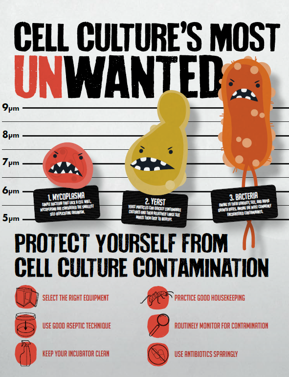 Cell Culture Infographic